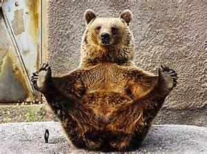 bear in boat pose